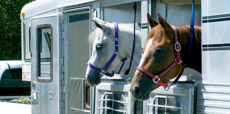 horse-float-finance
