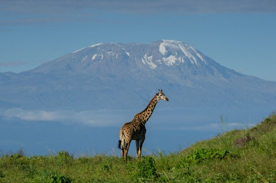 view-kilimanjaro-from-Arusha